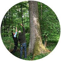 french forest.jpg