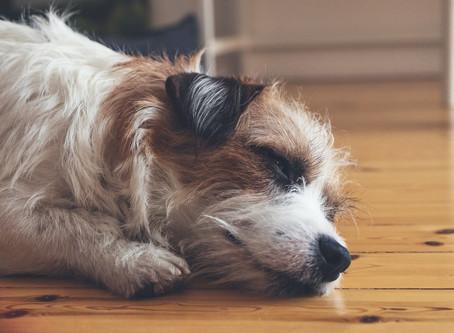 Will My Dog Ruin My Hardwood Floor?