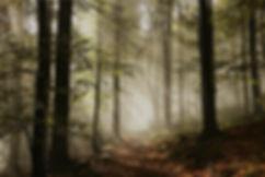 oak%20forest_edited.jpg