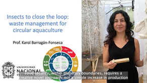 Insects to close the loop: Waste management for circular aquaculture.