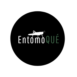 EntomoQUÉ | Leipzig | Alemania