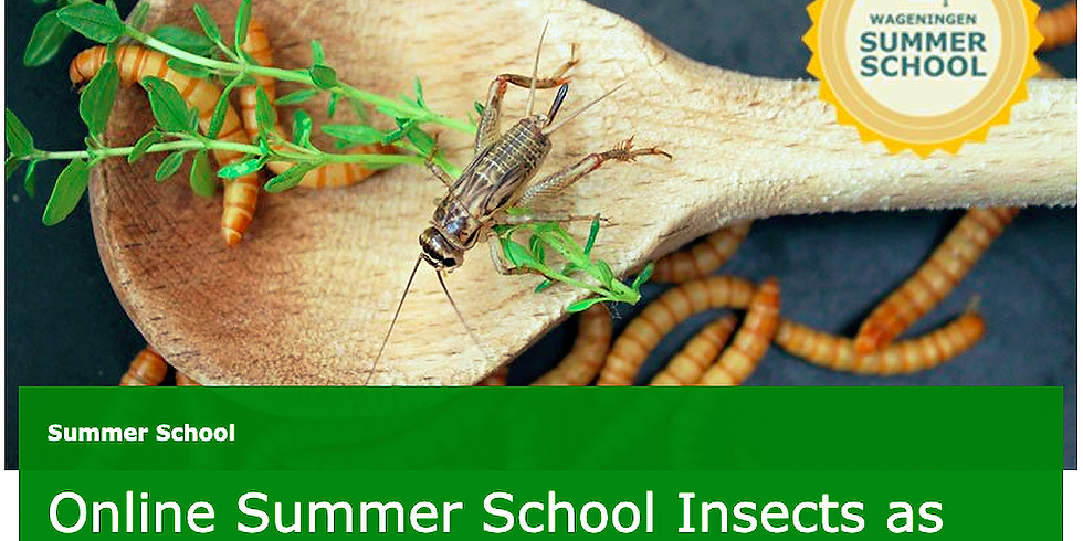Online Summer School Insects as Food & Feed