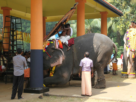 Post-Traumatic Stress Disorder: Aftermath of Acute and Chronic Trauma in Elephants