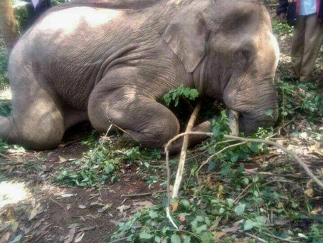 HUMAN POPULATION GROWTH IS THE GREATEST THREAT TO ASIAN ELEPHANTS' SURVIVAL