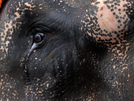 If You Love Elephants, You Need to See This Film