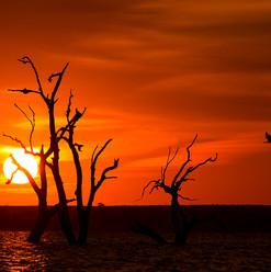 Lake Bonney, Barmera SA