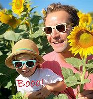 sunflowers chezelet gite