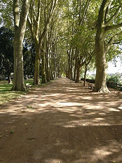 Riverside tree lined avenue Chinon