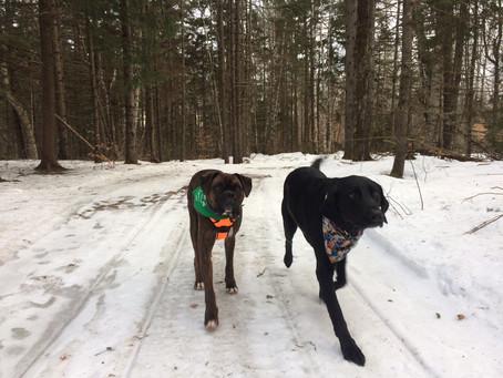 Trail Report, Sunday, 12/30/18
