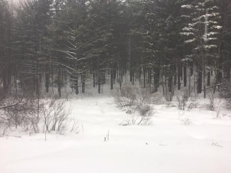 Trail Report, Sunday, 1/20/19