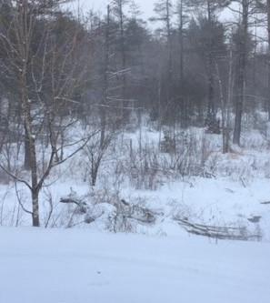 02/27/20- Trail Report