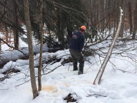 Trail Work Underway