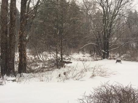 01/02/2020-Trail Report