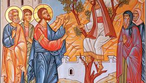 36th SUNDAY AFTER PENTECOST (SUNDAY OF ZACCHAEUS)