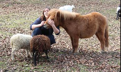 Mouton animaux ferme pédagogique le Car à Pattes