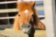 poney ferme pédagogique Le car à pattes
