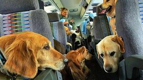 Proteção e cuidados com os Pets antes e durante a viagem