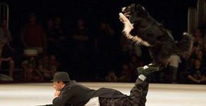 Pela primeira vez na história, cão brasileiro participa de evento na Inglaterra na modalidade de ade
