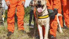 Portaria regulamenta fiscalização com cães e cria centro de treinamento