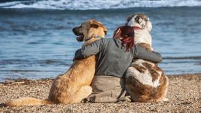 Nova pesquisa aponta que animais de estimação nos fazem sentir menos solitários
