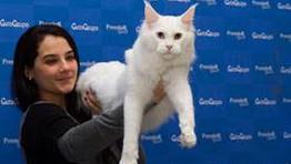 120 gatos de 13 raças participam de evento em Salvador – 28 e 29 de abril