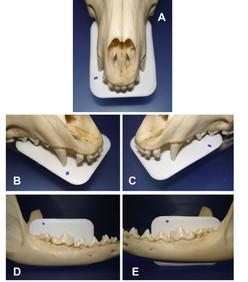 Odontologia: Diagnóstico por imagem em cães e gatos