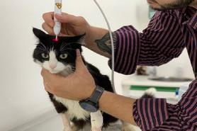 Fototerapia é opção para tratamento em felinos