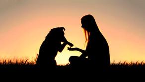 São Paulo ganha espaço de apoio ao luto para quem perdeu seu Pet