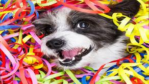 Carnaval com os pets: como conciliar folia e cuidados