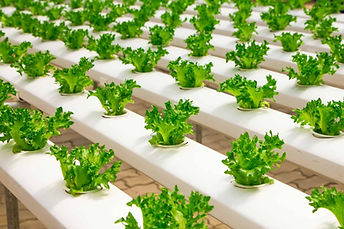 How-I-Built-My-DIY-Hydroponic-System-and