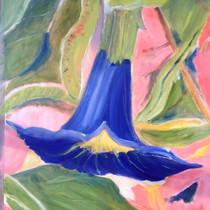 Blauw met roze Datura