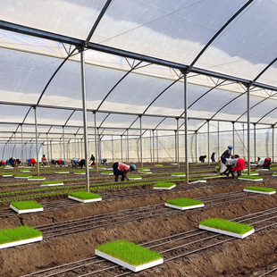 Agris expands Evergreen Herbs Ltd. Sales and new job creation surpass pre-COVID levels.