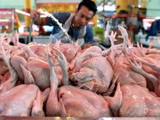 Ayam Melambung: Kembalikan Ketuanan Pengguna