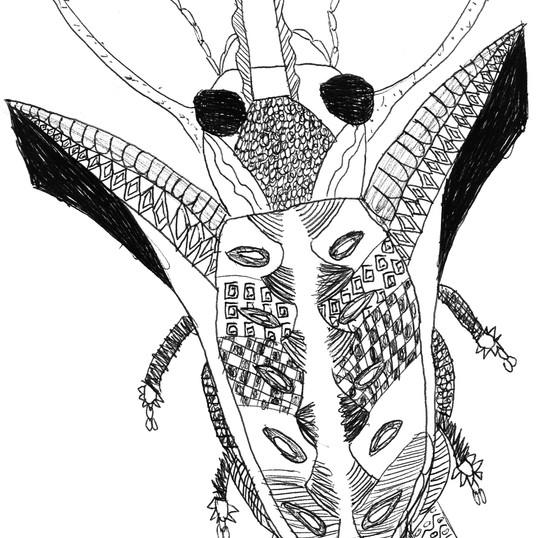 insecte NB 11 2.jpg