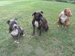 Meatball, Hank, Chloe