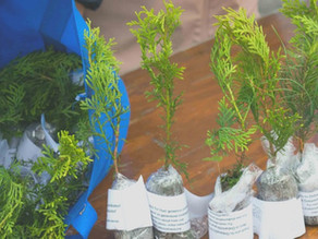 Ecology Ottawa Tree Giveaway (POSTPONED/CANCELLED)