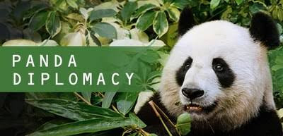 Panda Diplomacy in 500 Words