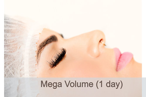 1 Day Volume Intensive Course