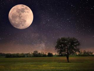 's Nachts is alles anders: zeker bij VOLLE MAAN