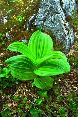 Raincoast Flora
