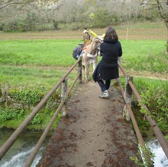 Sur la route de Saint Jacques de Compostelle avec un âne