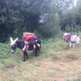 Nos ânes à louer dans la région de Cahors