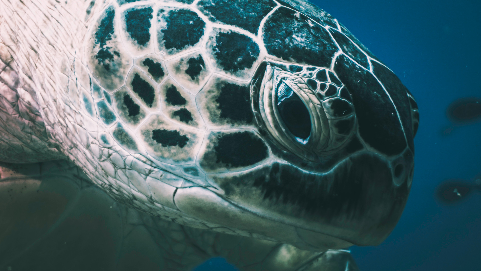 Underwater Videography