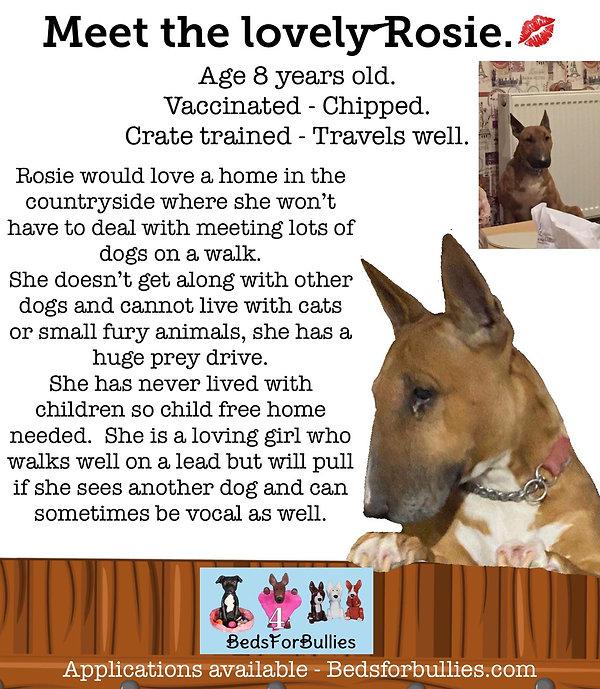 Rosie-Beds-For-Bullies-Bull-Terrier-Rescue.jpg