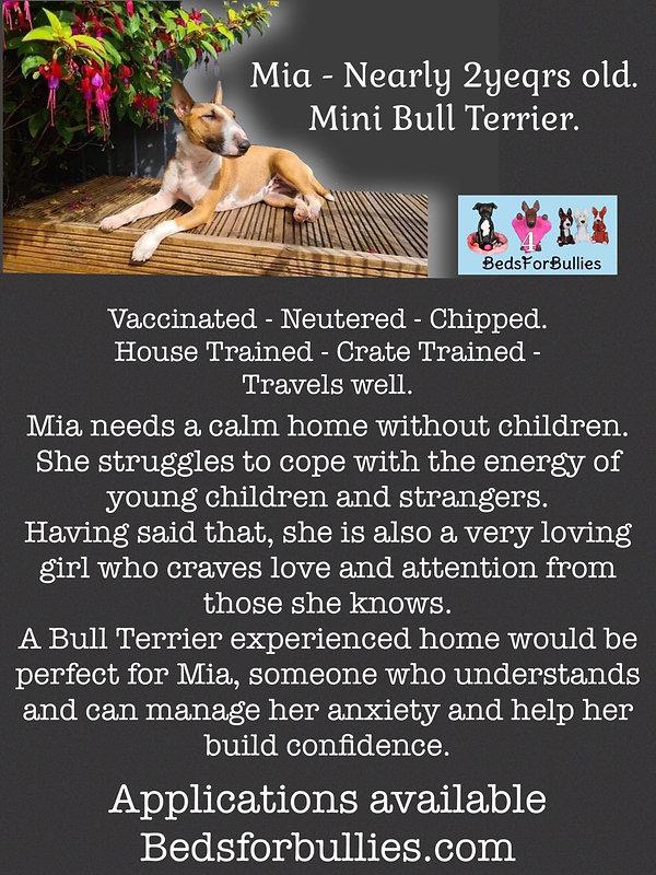 mis-bedsforbullies-bull-terrier-rescue-uk