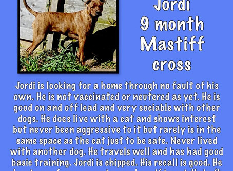 Jordi boy needs a home