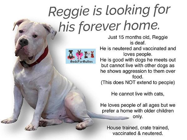 Reggie-BedsforBullies