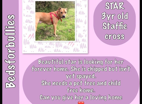 Star available for adoption