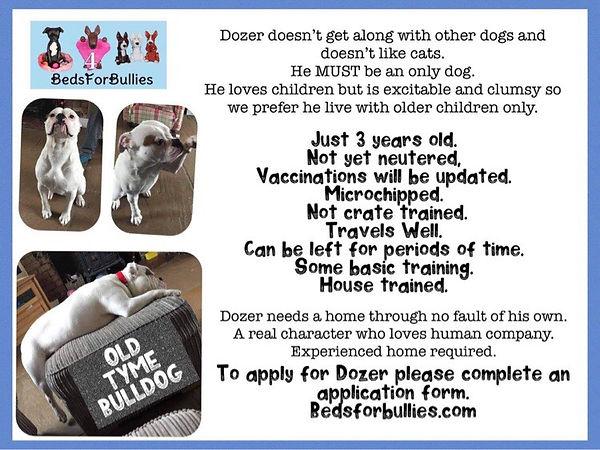 dozer-beds-for-bullies
