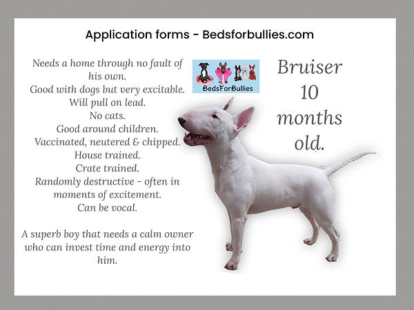 bruiser-beds-for-bullies-rescue